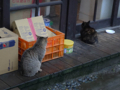 Cats of Houtong, #6464