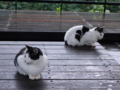 Cats of Houtong, #6467