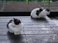 Cats of Houtong, #6468