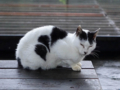 Cats of Houtong, #6470