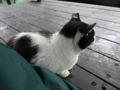 Cats of Houtong, #6471