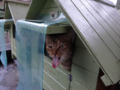 Cats of Houtong, #6479