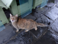 Cats of Houtong, #6480
