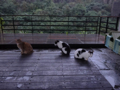 Cats of Houtong, #6481