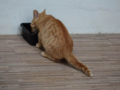 Cats of Houtong, #6491