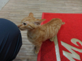 Cats of Houtong, #6493