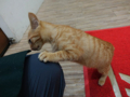 Cats of Houtong, #6494