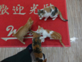 Cats of Houtong, #6498
