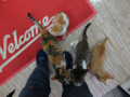 Cats of Houtong, #6501