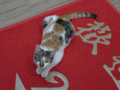 Cats of Houtong, #6502