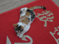 Cats of Houtong, #6503