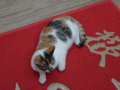 Cats of Houtong, #6504