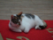 Cats of Houtong, #6516