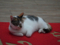 Cats of Houtong, #6517