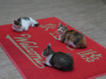 Cats of Houtong, #6518