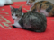Cats of Houtong, #6524