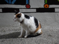 Cats of Houtong, #6544