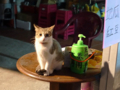 Cats of Houtong, #6546