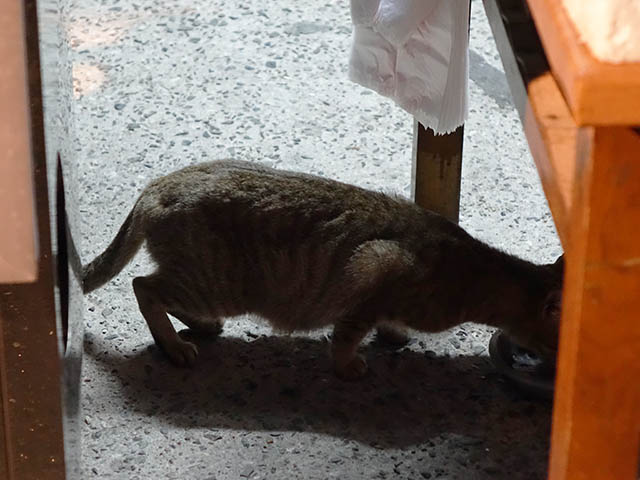 Cats of Houtong, #6547