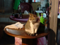 Cats of Houtong, #6548