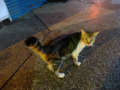 Cats of Houtong, #6556