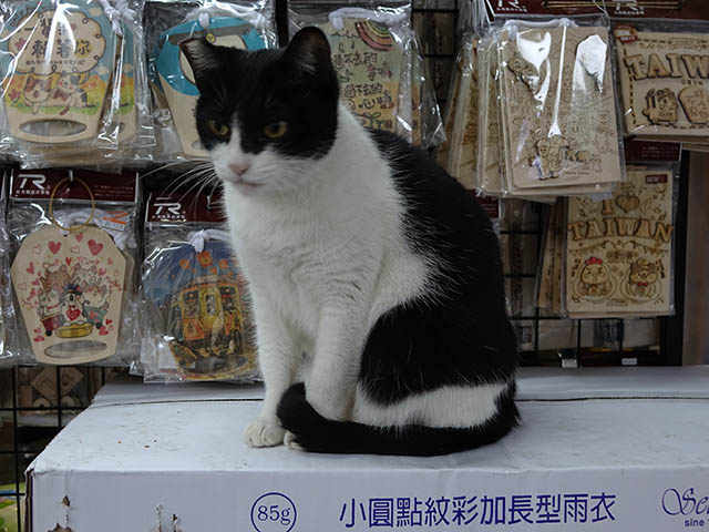 Cats of Houtong, #6690