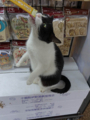 Cats of Houtong, #6701