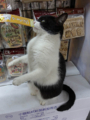 Cats of Houtong, #6709