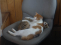 Cats of Houtong, #6720