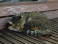 Cats of Houtong, #6745