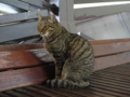 Cats of Houtong, #6759