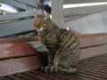 Cats of Houtong, #6760