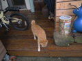 Cats of Houtong, #0855