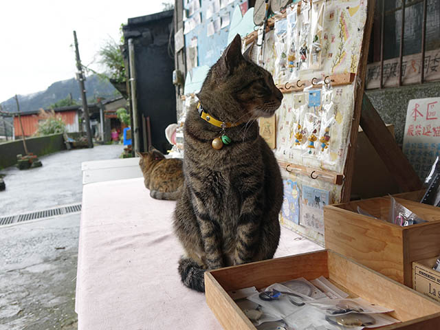 Cats of Houtong, #6783