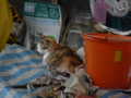 Cats of Houtong, #6805