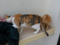 Cats of Houtong, #6812
