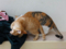 Cats of Houtong, #6814