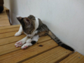 Cats of Houtong, #6833