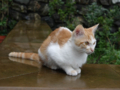 Cats of Houtong, #6857