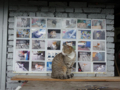 Cats of Houtong, #6875