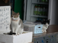 Cats of Houtong, #6893
