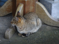 Cats of Houtong, #6895