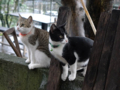 Cats of Houtong, #6920