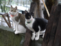 Cats of Houtong, #6921