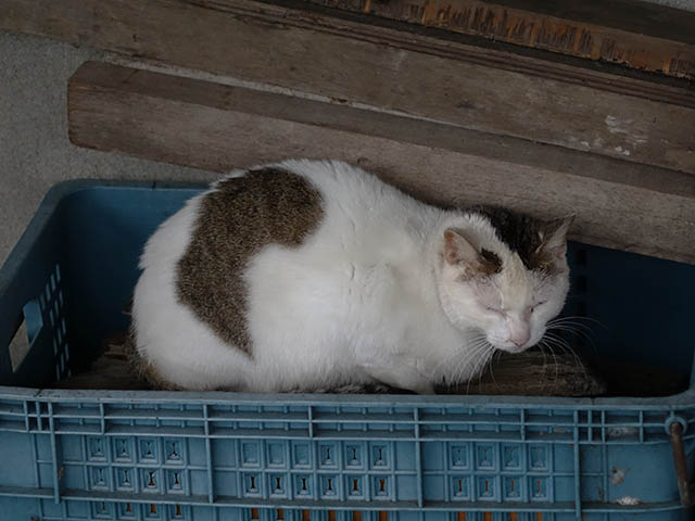 Cats of Houtong, #6926