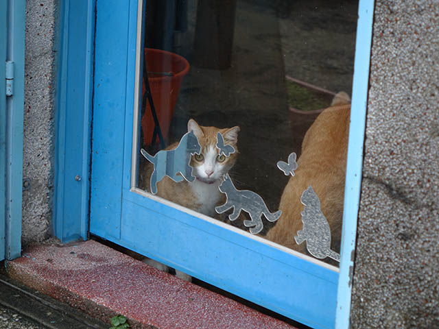 Cats of Houtong, #6934