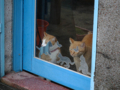 Cats of Houtong, #6935