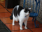 Cats of Houtong, #6940