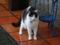 Cats of Houtong, #6941