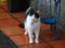 Cats of Houtong, #6942